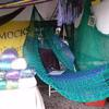 Sea Sister's Trading Queen Size hammock